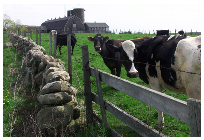Nearby Attractions of the Stonehaven Family Farm
